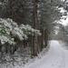 Fehér út