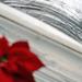 mikulásvirág és az ember