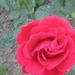 2013 Nyári virágok