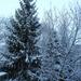 Délelőtti havazás.