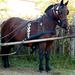 Domaszék lovasnap 002