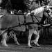 Domaszék lovasnap 011