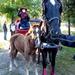 Domaszék lovasnap 075