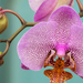 Orchidea 2.