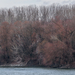 Lombtalan erdő