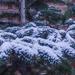 Kis hó - kis öröm-2