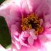 Album - Virágok és termések