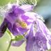 Virág a fényben