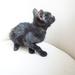 Album - Flórián a kóbor fekete macska
