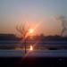 reggel a duna parton