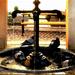 Reggeli galamb fürdő