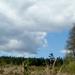 A soproni Dudlesz erdő 3.