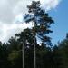 A soproni Dudlesz erdő 1.