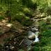 A Gaja patak Bakonynána közelében