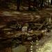 A Gaja patak pihenője