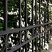 Kerítés virág