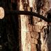 Rozsdás szög élő fában