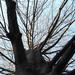 Mennyi madár élőhelye lehet ez a terebélyes fa?
