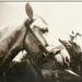 913. Szidi és Kata, parádés lovak (1935-1945))