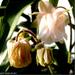 Harangláb virágkép Katinak