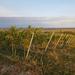 Szőlők a Fertő-tónál