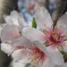 Album - 2013 04 17 Tavaszi virágcsokor