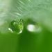 Zöld színben