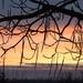 Téli hajnal