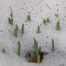 Hóvirágfázisok 1