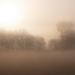 Fények a ködben