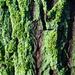 Zöld télen 2