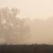 Fák a ködben