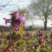 Tavaszi árvák