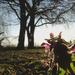 Reggeli kertvég