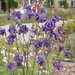 Városi virág