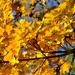 Őszi színek 2