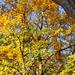 Őszi színek 1