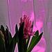 Tavasz az ablakban