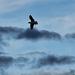 Szabadság szárnyán