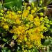 Gellérthegyi virág