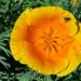Virág 2