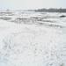 Tél a pusztán