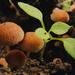 Amikor a gombák nem nőnek az égig