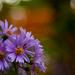 Virág ősszel
