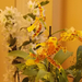 Album - Orchidea és Bromélia Kiállítás