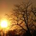 A fák is felkészültek a télre az október végi naplementében