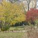 Bécs, a Bécsi Egyetem Botanikus kertje, SzG3