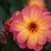 Album - Virágok,ahogy én látom