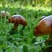 Gombák földjén
