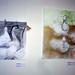 El Hassan Róza-kacsák